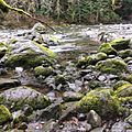 Mossy rocks on South Fork Snoqualmie River.jpg