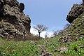 Mount Ara 8.jpg