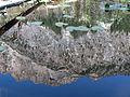 Mount Heyburn reflected in Lily Lake (14871775630).jpg