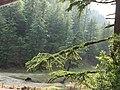Mussoorie greenery beauty.jpg