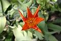Mystery Flower.jpg