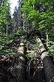NPR Boubínský prales 20120910 07.jpg