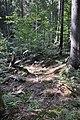 NPR Boubínský prales 20120910 24.jpg