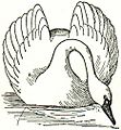 NSRW Swan.jpg