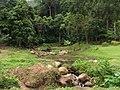 Nationak park Panom Bencha - Národní park Panom Bencha - panoramio - Thajsko.jpg