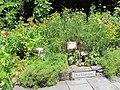 National Arboretum in July (23573399845).jpg
