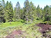 National nature reserve Velky mocal in 2011.jpg
