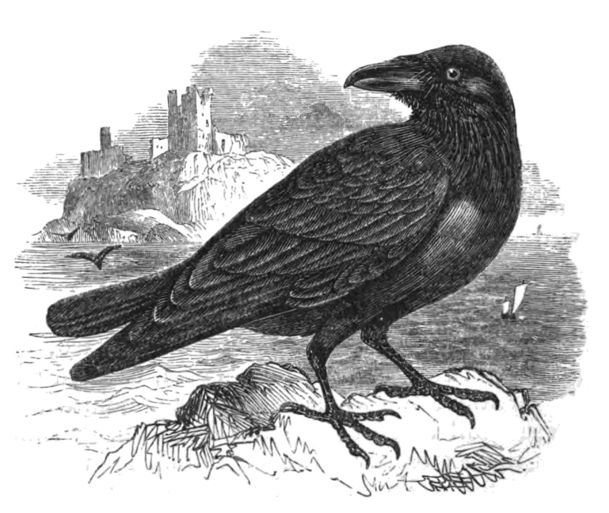 Raven Tattoo Designs Meaning