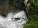 Naturpark Ötscher-Tormäuer - Trefflingfall III - Wasser gräbt eine Höhle.jpg