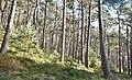 Naturpark und Biosphärenreservat Pfälzerwald - panoramio (13).jpg