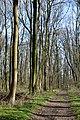 Naturschutzgebiet Haseder Busch - Im Haseder Busch (44).jpg