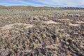 Near Cornucopia Draw - Flickr - aspidoscelis (12).jpg