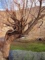 Neyshabour - Kalateh Jafar Abad - panoramio (3).jpg