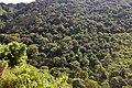 Ngorongoro Crater walls (2) (28669419405).jpg