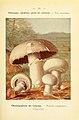 Nouvel atlas de poche des champignons comestibles et vénéneux (Pl. 39) (6459641259).jpg