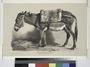Nouvelles études d'animaux aux deux crayons, no. 3- (Un âne) (NYPL b16513363-1150576).tiff