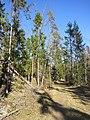 Nytebodaskogen.jpg