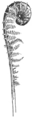 OFH-005 Crosier.png