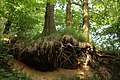 Oberlausitz 2012-05-26-7253.jpg