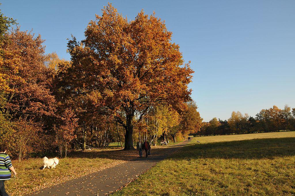 Single obertshausen
