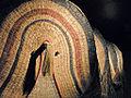 Objets dAmazonie (réserves visitables du musée national dethnologie) (1450149362).jpg