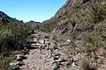 Old road to Prateleiras trail^ - panoramio (2).jpg