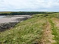 On the Pembrokeshire Coastal Path at Sandy Haven, Herbrandston - geograph.org.uk - 1637384.jpg