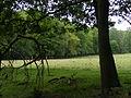 Open graasvlakte in Nationaal Park Veluwezoom.JPG