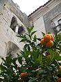 Orangetree at Sé (Laurent de Walick).jpg