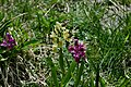 Orchidee Selvatiche.jpg