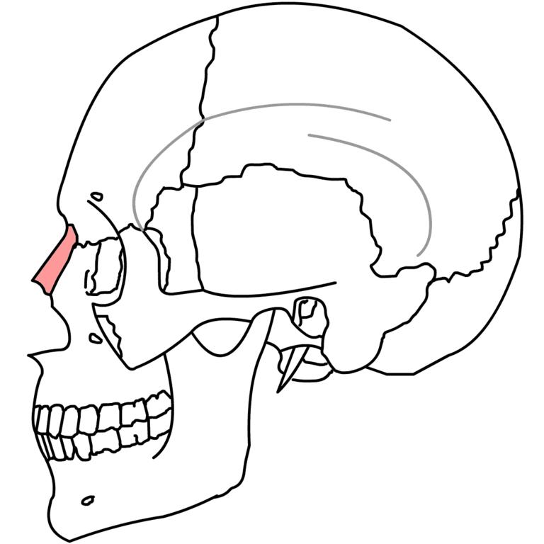 Fileos Nasal