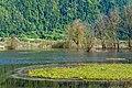 Ossiach Alt-Ossiach Bleistätter Moor Feuchtwiesen 23052019 7004.jpg