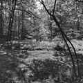 Overzicht bos - Hilversum - 20113366 - RCE.jpg