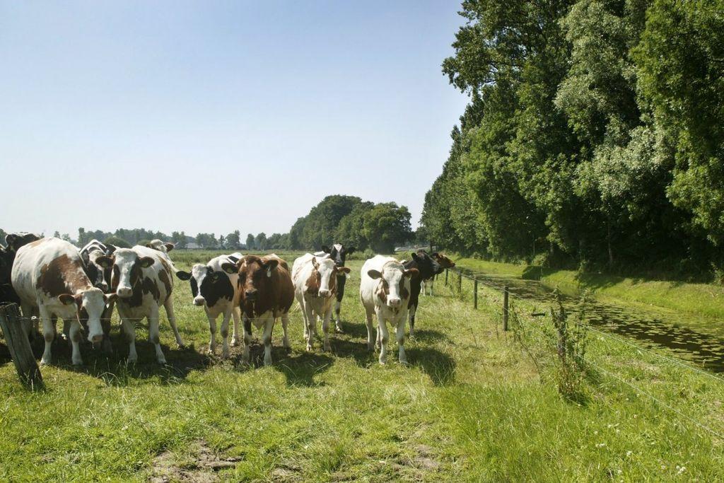 Kamp laat melkhandel Vrebamel failliet verklaren ...