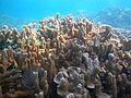 Papahanaumokuakea marine National Monument. Coconut Island, Moku o Loʻe.jpg