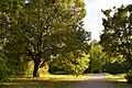 Parco del Loto (Lugo).jpg