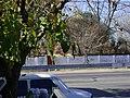 Paredon de colonia 20 de junio. calle Montes de Oca - panoramio.jpg