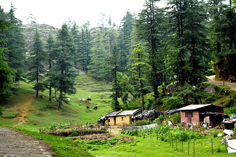 Farm in Mussoorie