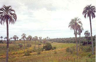El Palmar National Park - Image: Parque Nacional El Palmar (3)