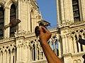 Passer domesticus -Notre Dame de Paris Cathedral, Paris, France.jpg
