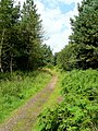 Path into the forest - geograph.org.uk - 1456417.jpg