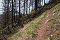 Path on mountain 2.jpg