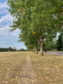 Paved avenue and desire path in Finsbury Park, London, England.png