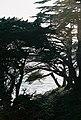 Pebble Beach, Del Monte Forest, CA, USA - panoramio (2).jpg