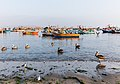 Pelícano peruano (Pelecanus thagus), puerto de Paracas, Perú, 2015-07-29, DD 05.JPG