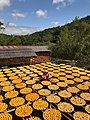 Persimmons drying under the sun in Xinpu.jpg