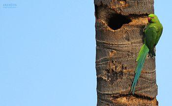 Photo parrot tm 01.jpg