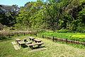 Picnic area - Institute for Nature Study, Tokyo - DSC02135.JPG
