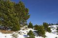 Picos de Urbión Picos de Urbión DSC 7370 (11552763716).jpg