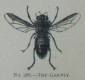 Picture Natural History - No 266 - The Gad-fly.png